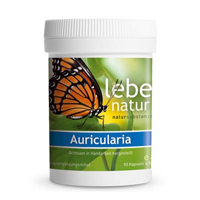 Auricularia Pilz BIO-90-Kps